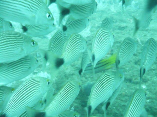 a- carol fish