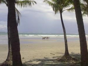 Caballos de Playa Samara