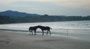 Horses roam the beaches freely