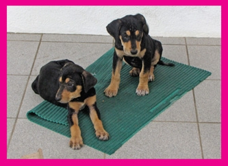 b- puppies